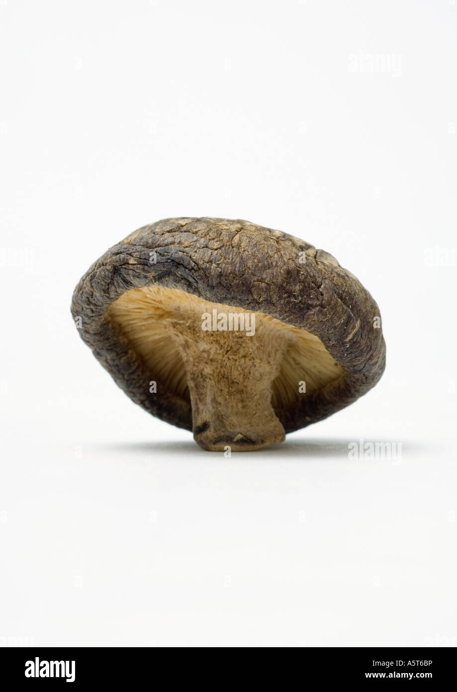 Shiitake mushroom - Stock Image