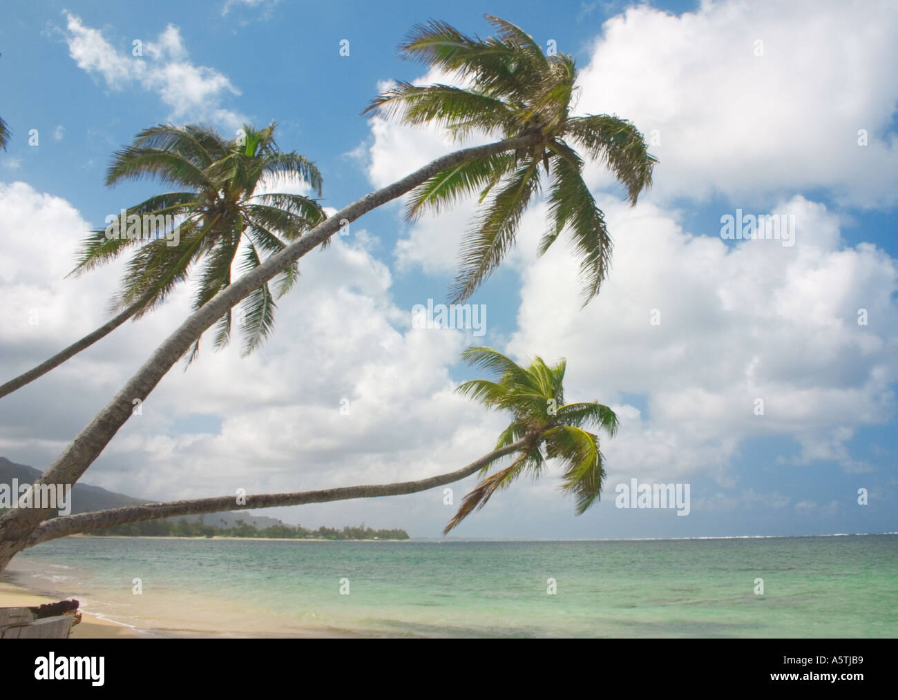palm trees leaning over beach stock photos palm trees leaning over