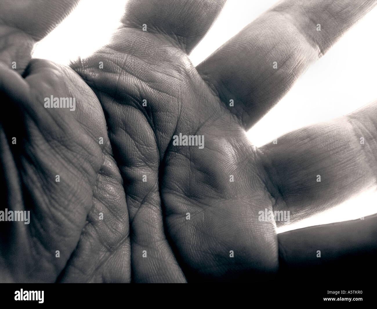 Black and white close up of palm of male hand against white background - Stock Image