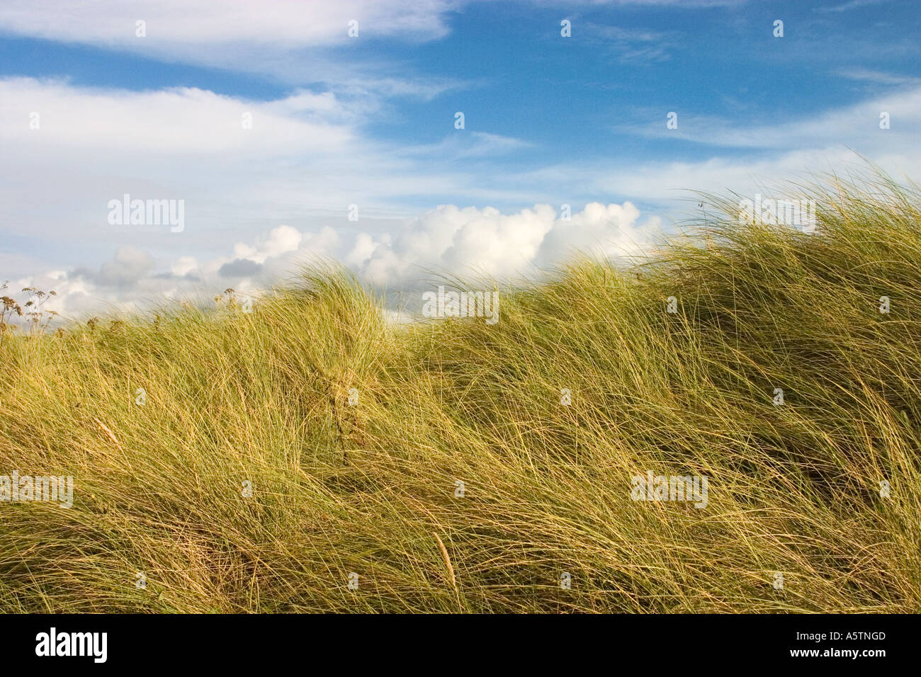 A shot of sand dunes on a breezy day. - Stock Image