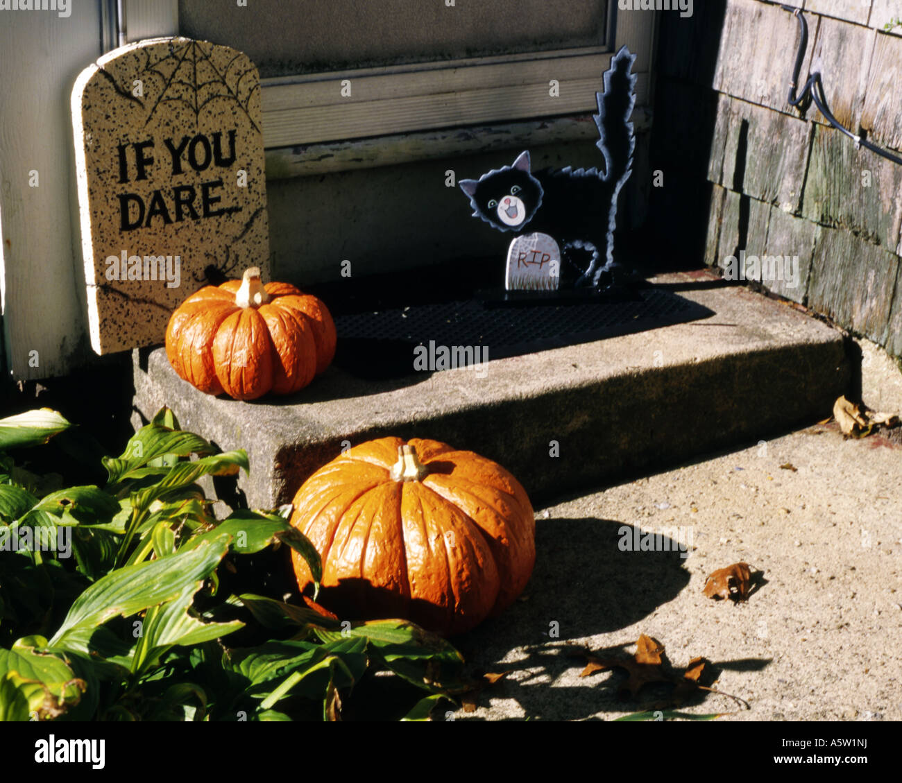 Doorstep display of pumpkinscardboard tombstone and cat as halloween approachesMartha\u0027s VineyardU.S.A. & Doorstep display of pumpkinscardboard tombstone and cat as ...
