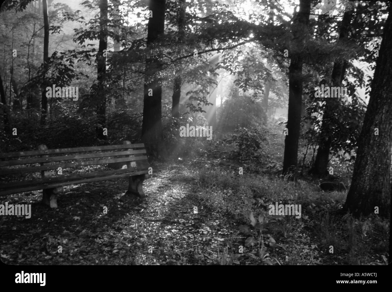 Black and white fine art landscape sunlight streaming through trees onto old bench at dawn - Stock Image
