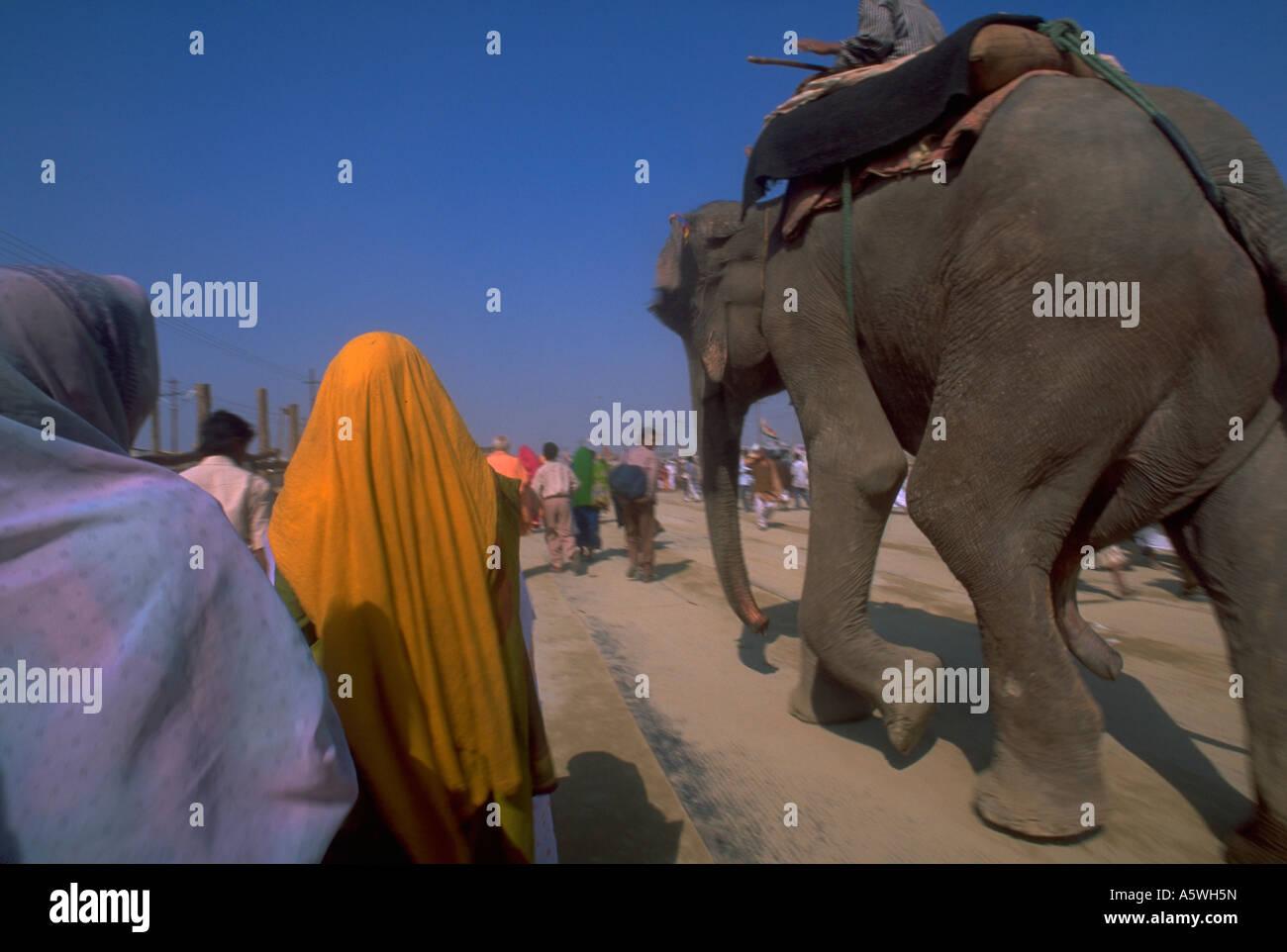 Painet hl0317 eleephant walking worshipers 2001 kumbhmela festival allahabad india hindu peasant streaming migrating - Stock Image
