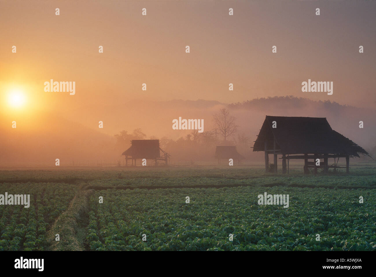 farm building and land in the morning mist nr Mae Hong Son Thailand - Stock Image