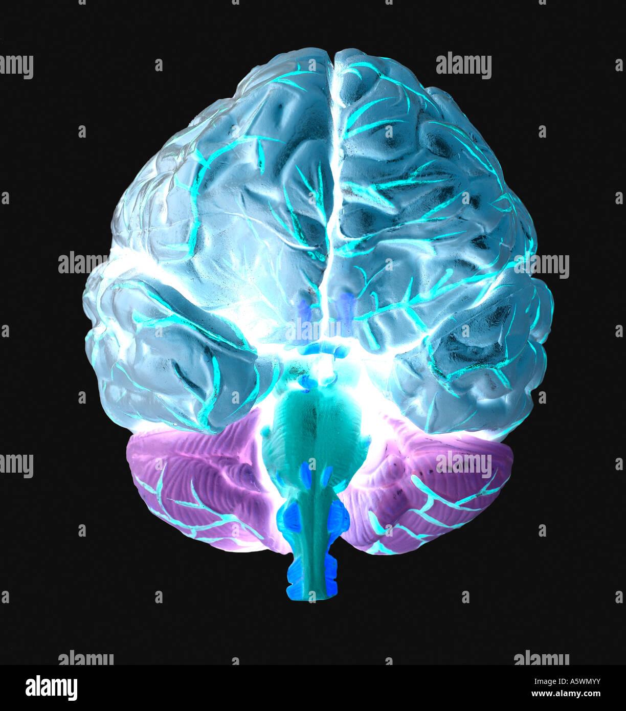 Human Brain silhouette - Stock Image