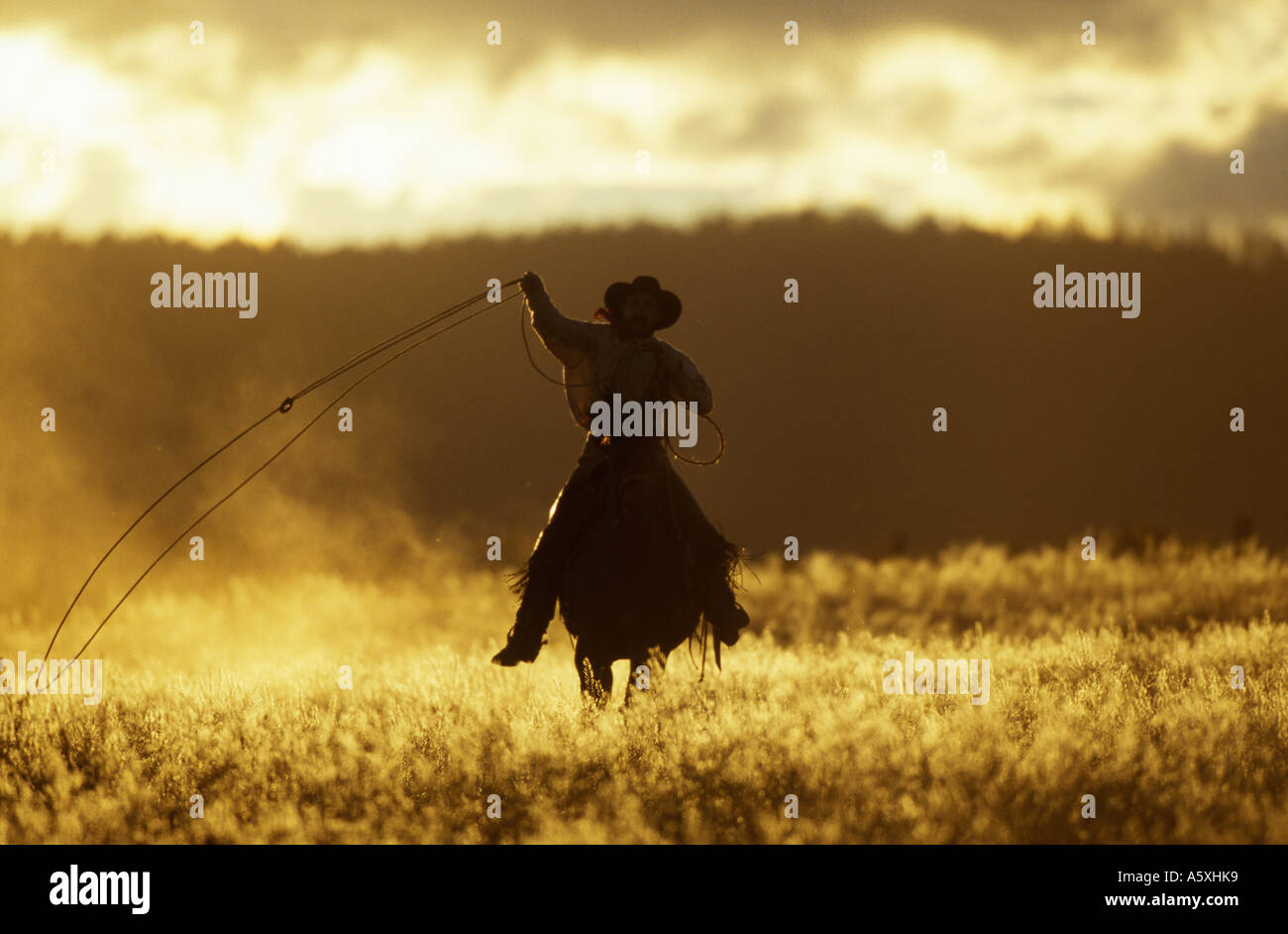 Cowboy using Lasso at sunset Oregon USA - Stock Image
