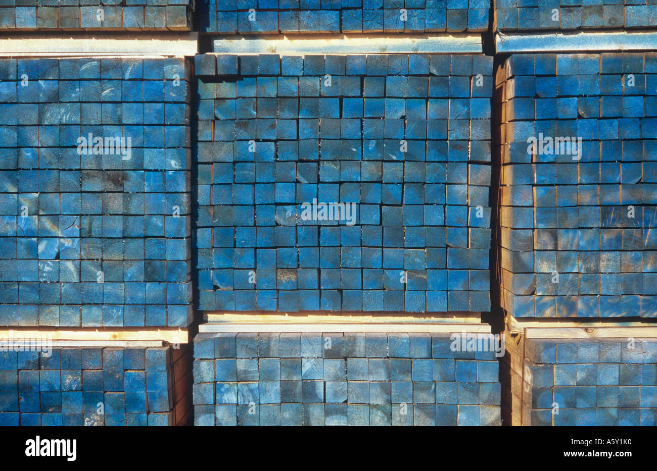 Detail of stacks of square bundled squared timber lengths treated or stained or marked with a blue dye - Stock Image
