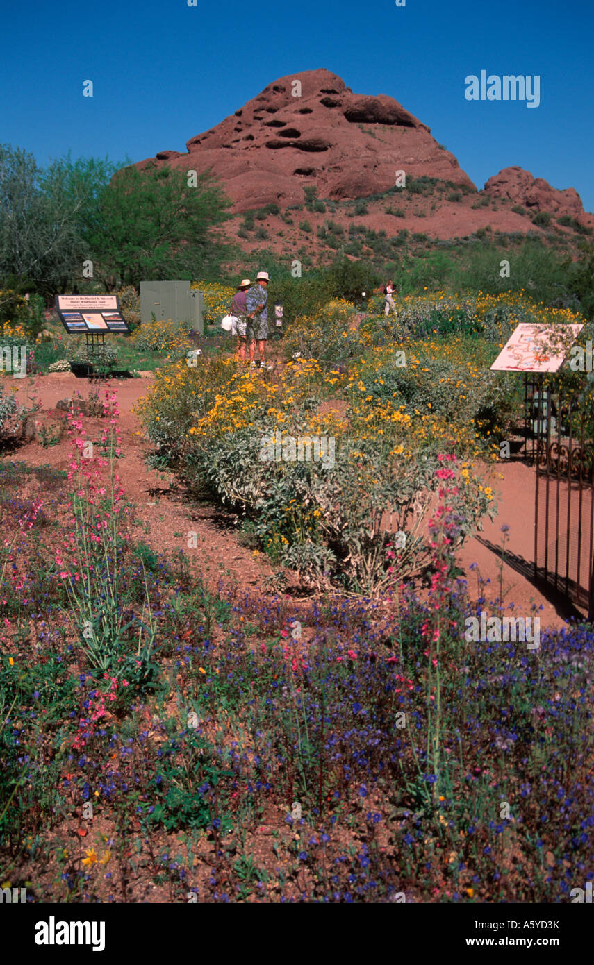 Desert Botanical Garden Phoenix Stock Photos & Desert Botanical ...