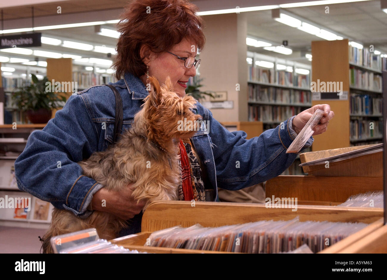 A woman shopping for CD s at a library with her small dog - Stock Image