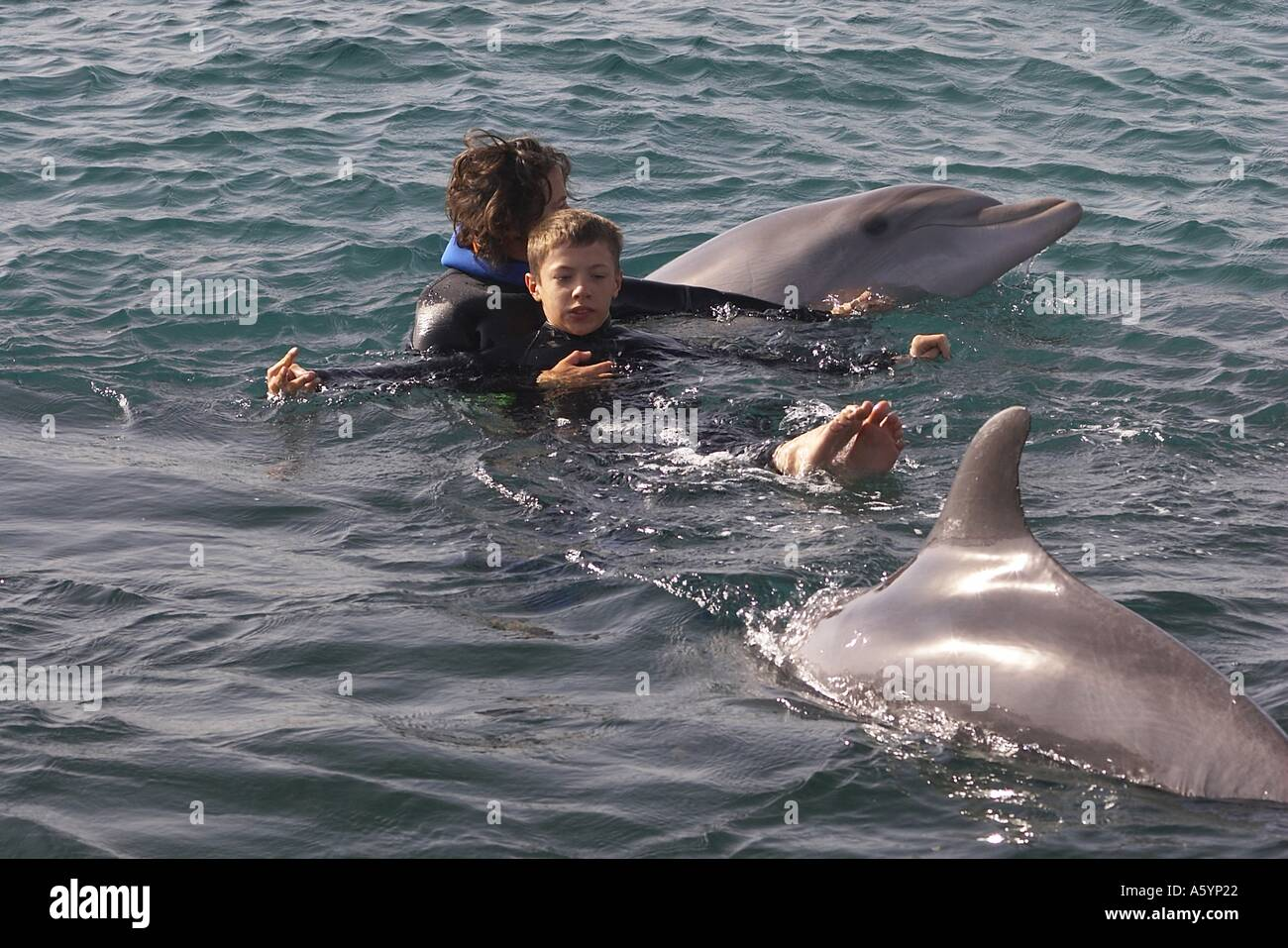 dolphin therapy with handicapped child Stock Photo