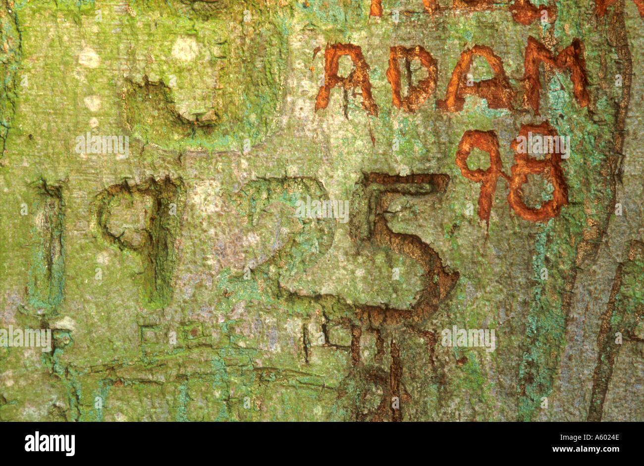 Graffiti carved in bark of tree blickling norfolk east anglia england uk stock image