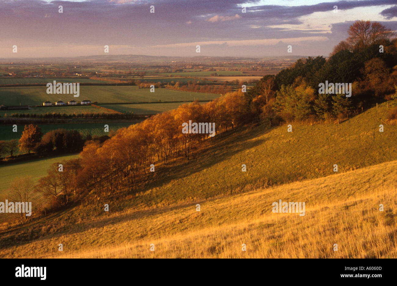 View West from Aston Rowant national nature reserve - Stock Image