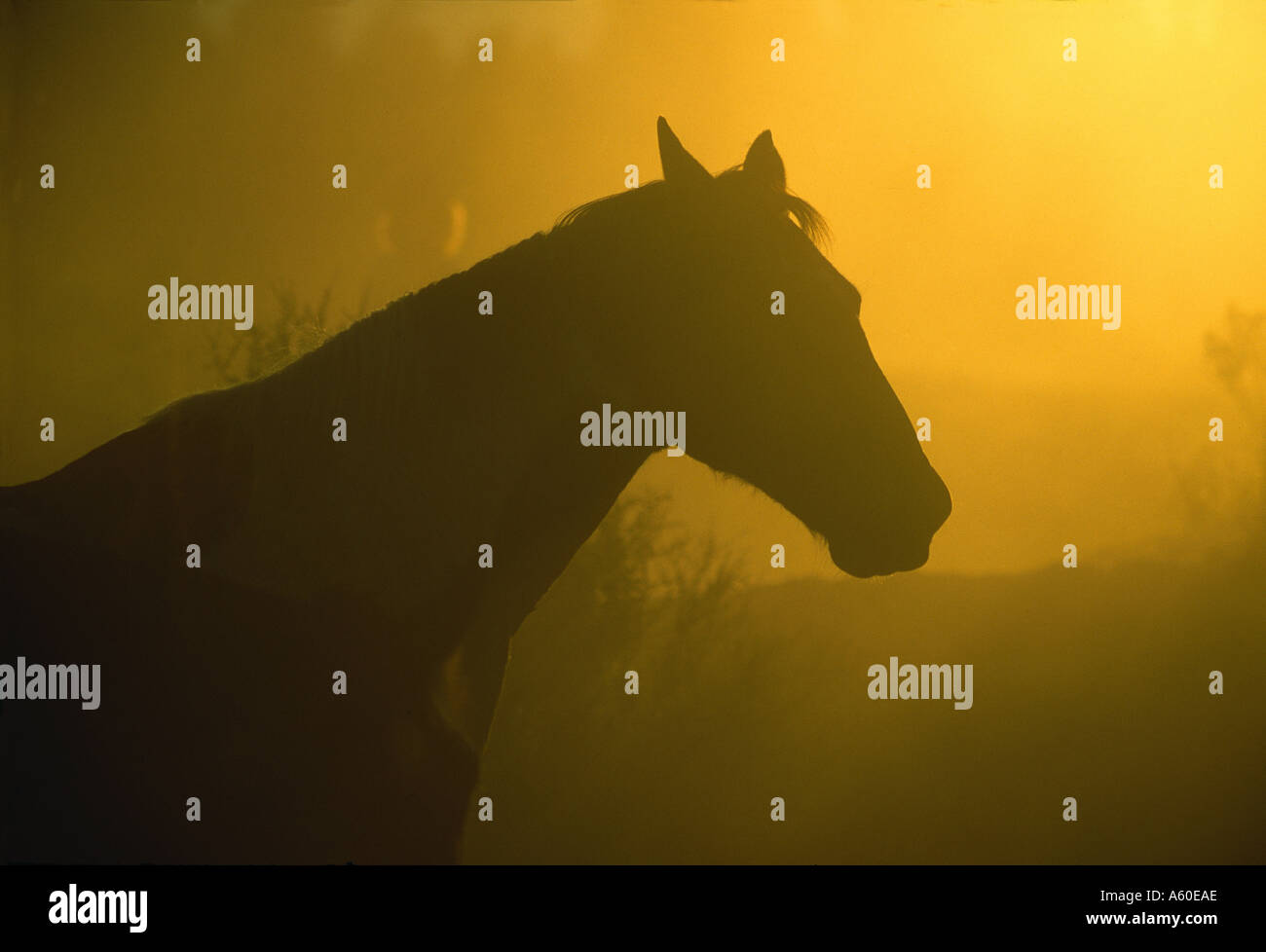 Horse at sunset, Oregon - Stock Image