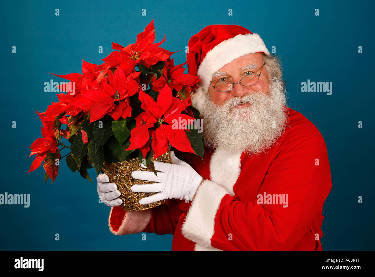 SANTA CLAUS HOLDS A POINSETTIA PLANT. - Stock Image