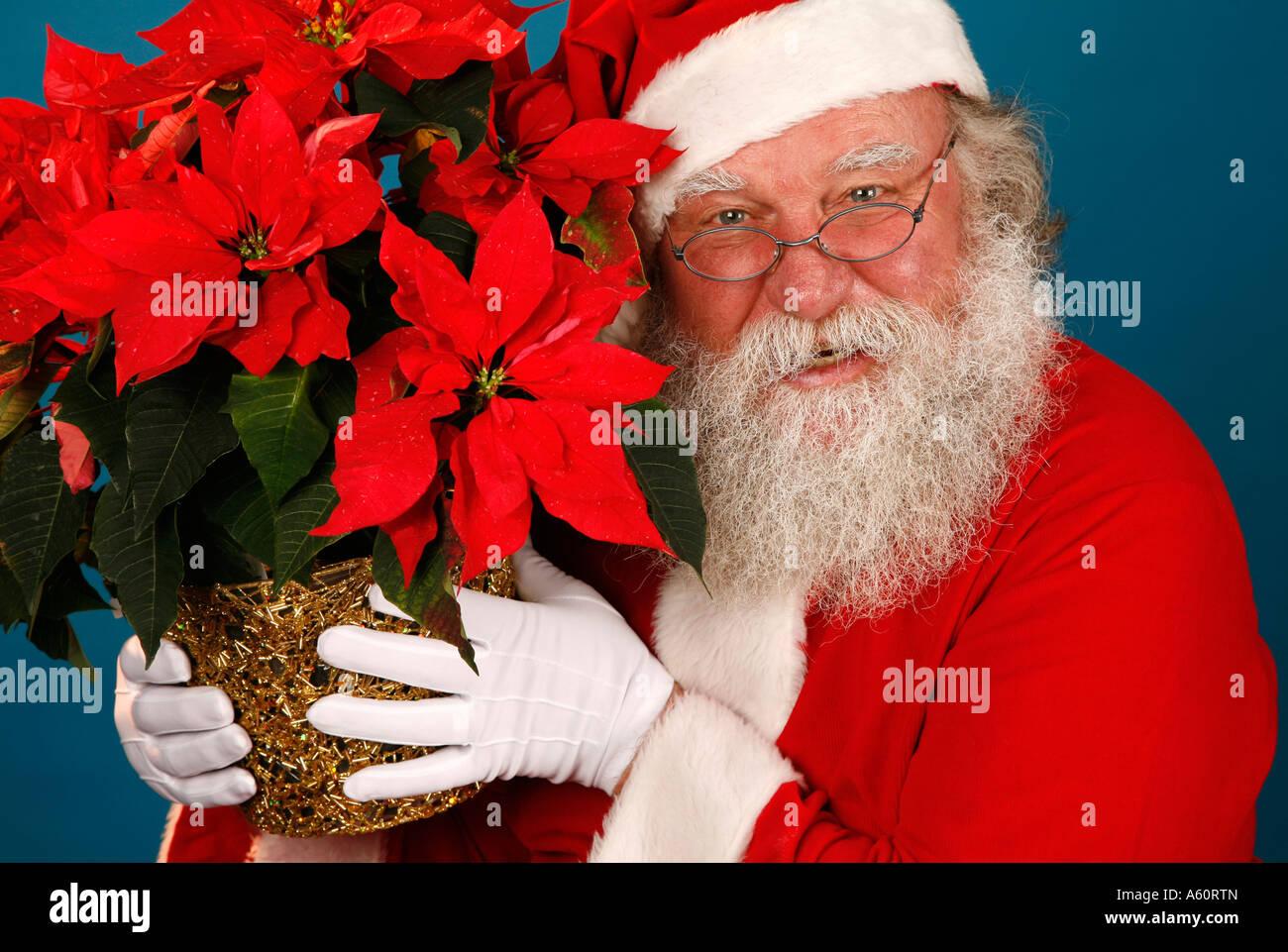 Santa Claus Holds A Poinsettia Plant Stock Photo Alamy