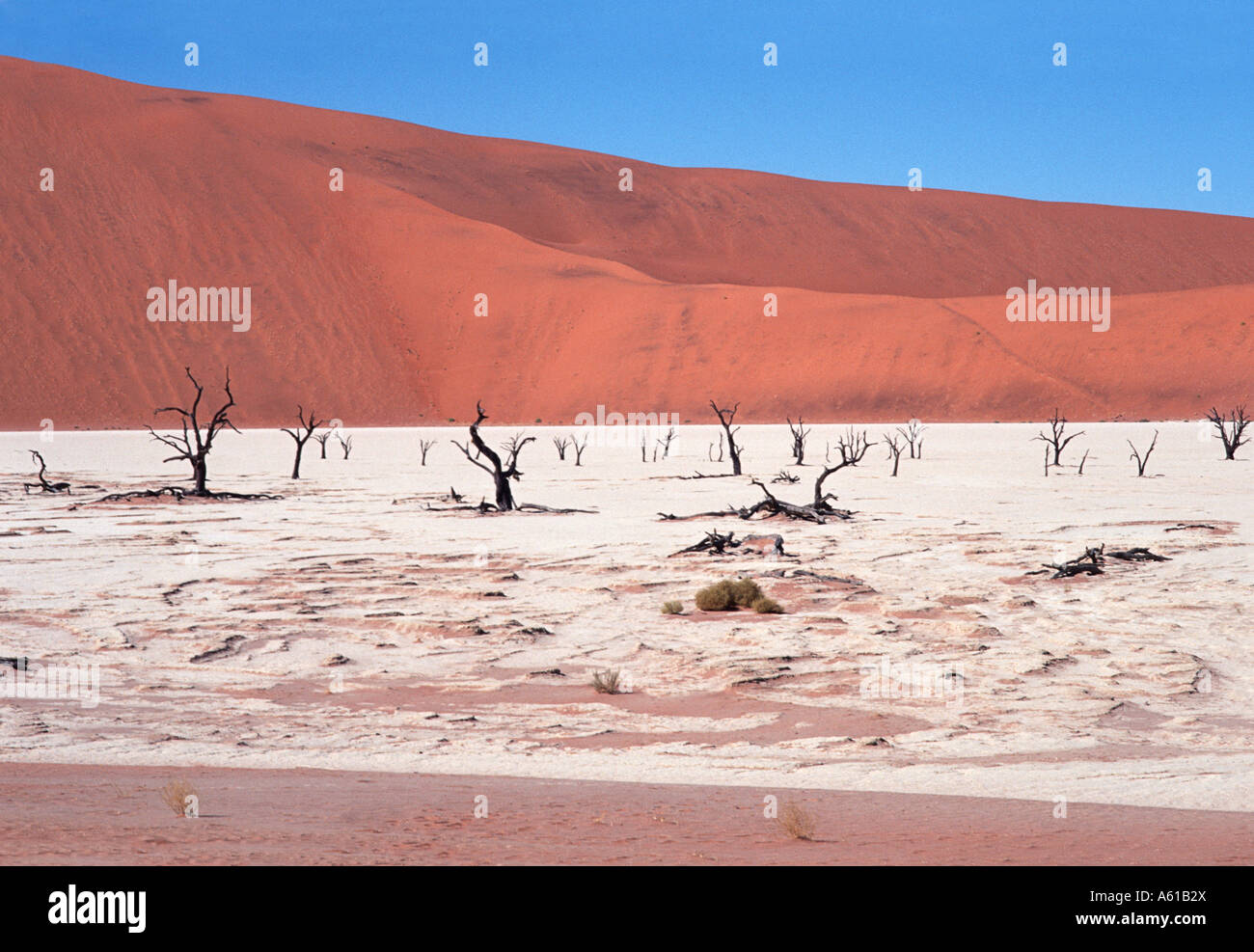 Sand dunes & dessicated acacia trees on a salt pan Dead Vlei Namib Naukluft National Park. Namibia - Stock Image