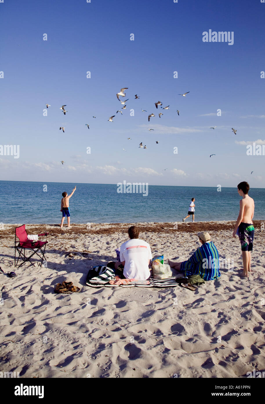 USA Florida Miami Beach with Hotels and sun worshipers Seagull and people Miami Beach Florida USA - Stock Image