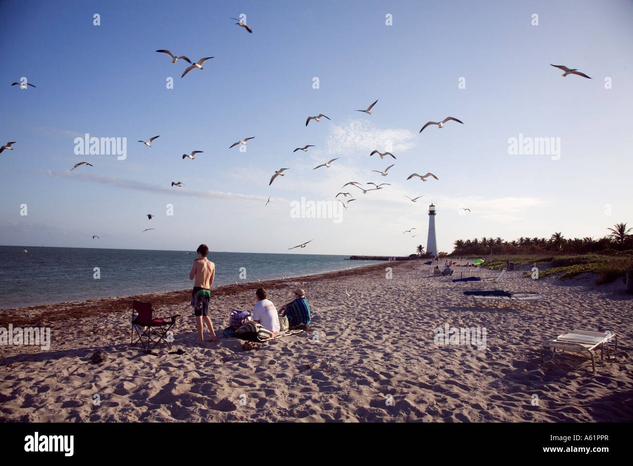 USA Florida Miami Beach with Hotels and sun worshipers Seagull by lighthouse at Miami Beach Florida USA - Stock Image