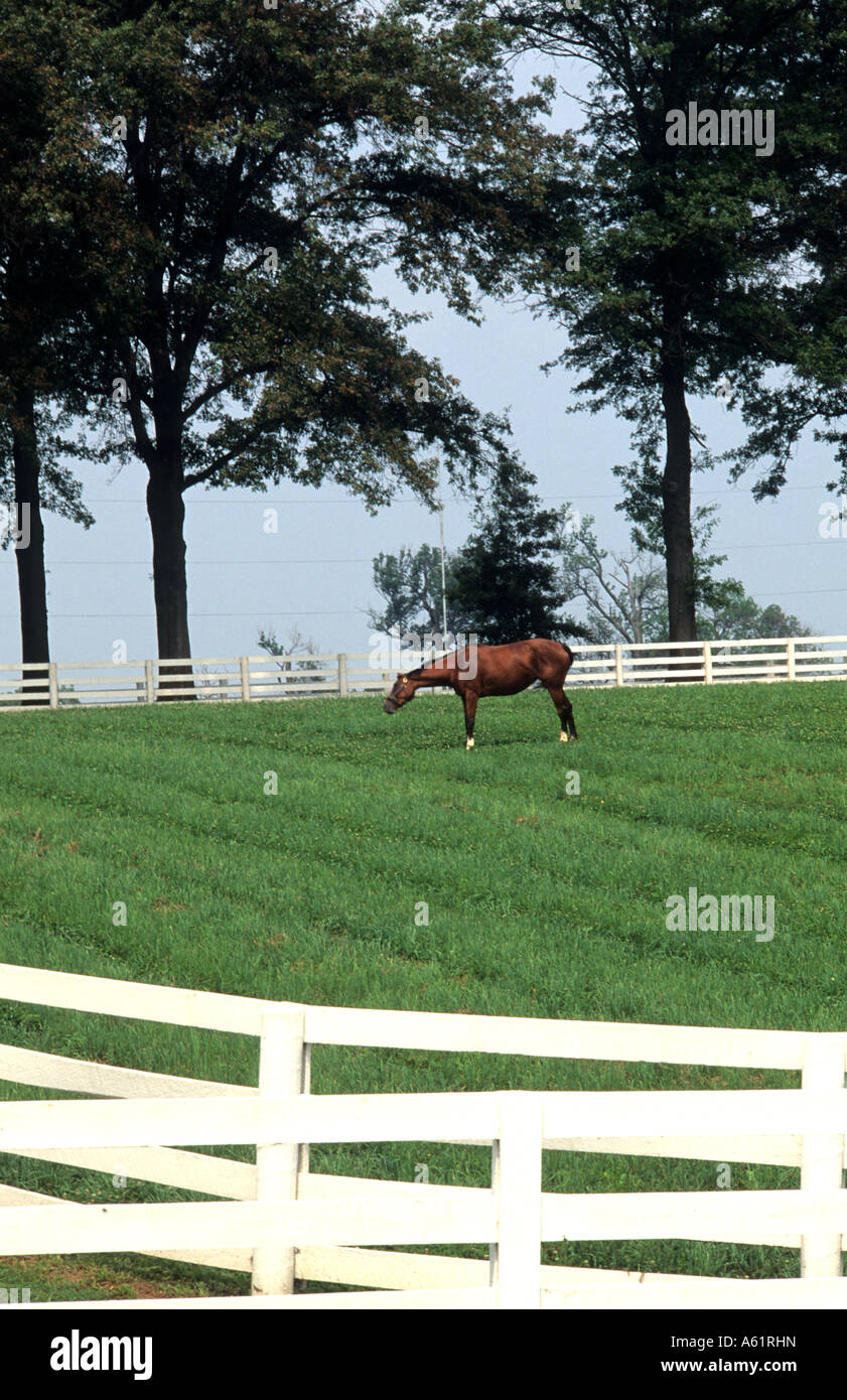 Beautiful Expensive Horse Farm With White Fence With Horse Grazing Stock Photo Alamy