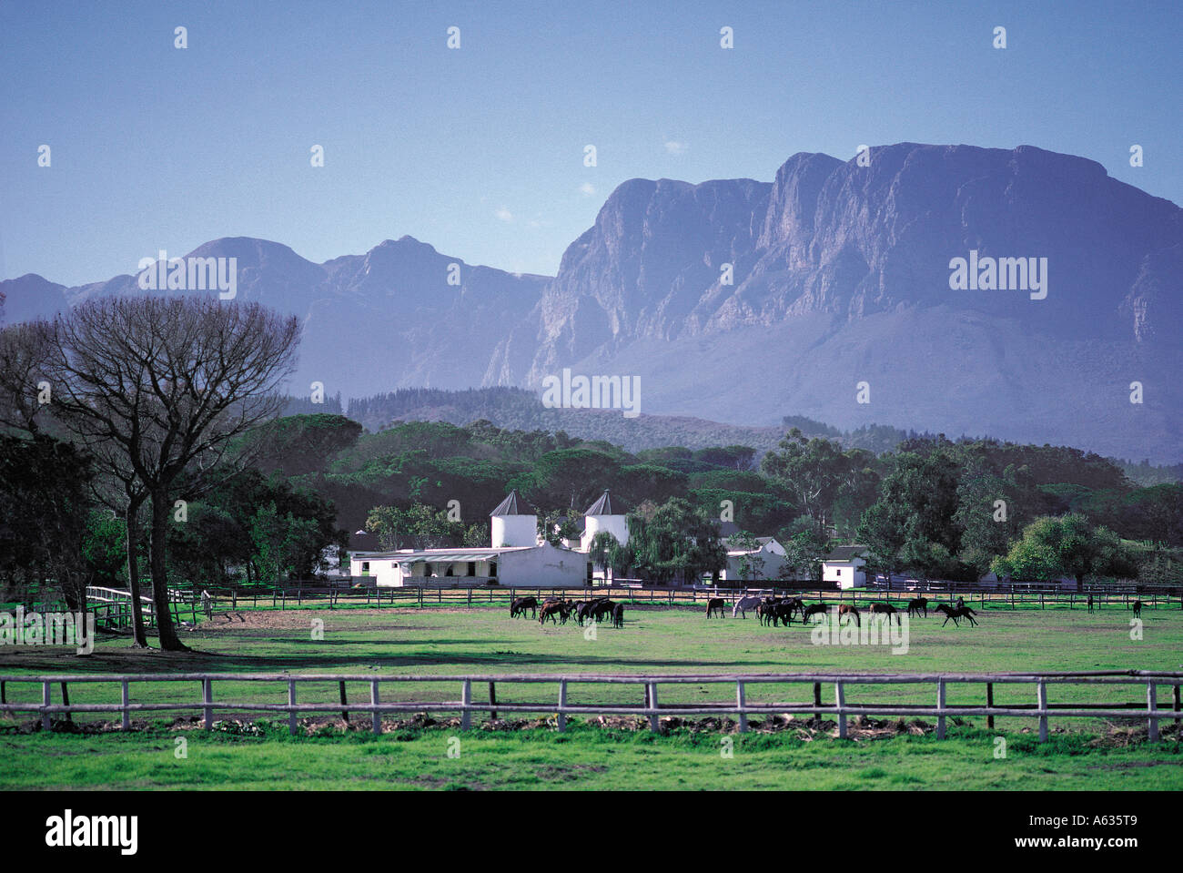 Stud Horse Farm In Beautiful Hilly Country Swellendam Cape Province Stock Photo Alamy