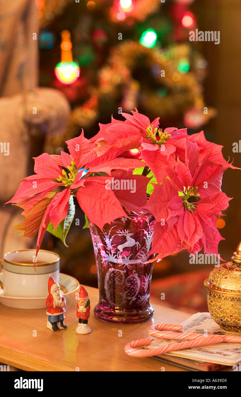 Christmas Living Room Still Life Poinsettias In Vase With Santa Stock Photo Alamy