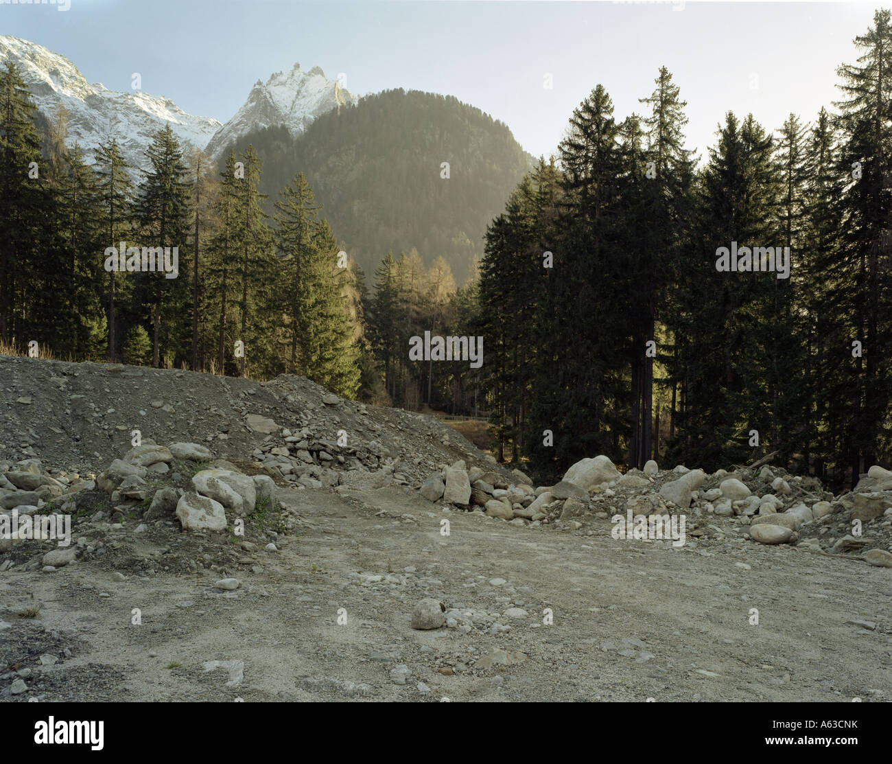 panoramic view of the wood in nearby of Maloia   pass close to saint moritz, swiss europe - Stock Image