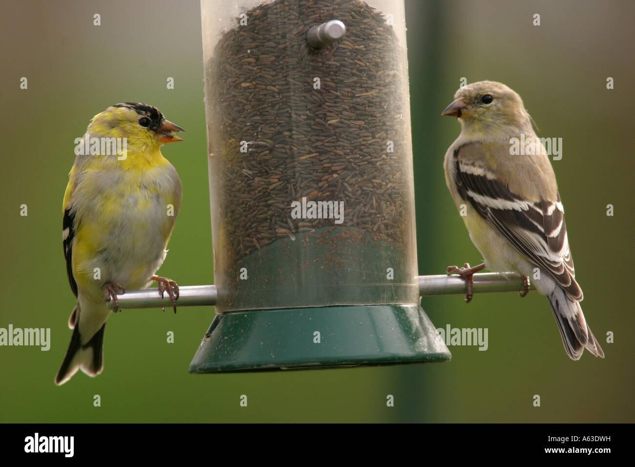 brandt photo feeders flickr thistle feeder york choosing tom audubon cc conservation new nyjer bird a