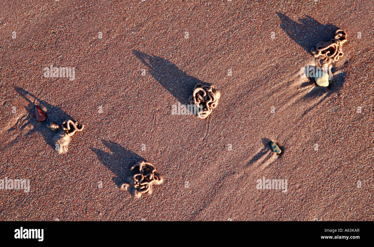 Lugworm casts on a beach at sunset - Stock Image