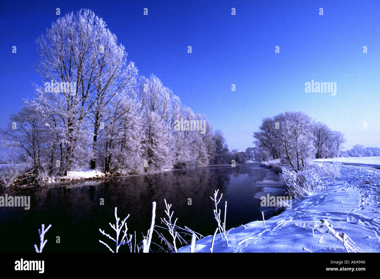 winter scenic tree hoarfrost cold icy snow - Stock Image