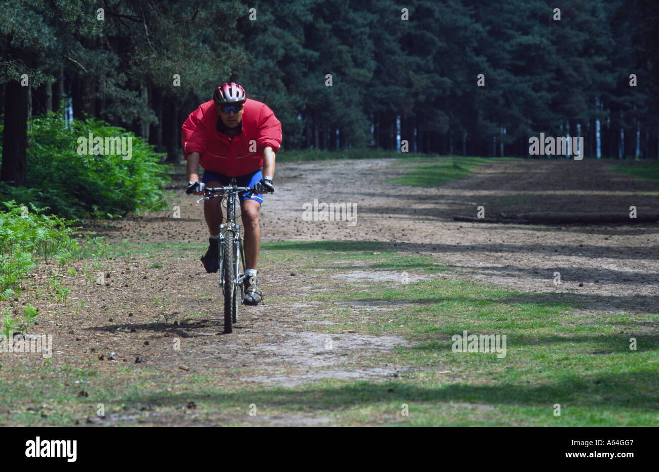 Mountain Biking at the bike park Brickhill Woods Woburn Sands forest Centre Parcs Stock Photo