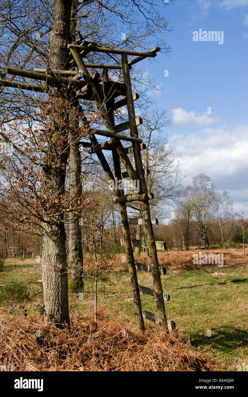 High seat used by marksmen when shooting Roe Deer. Forestry Comission plantation southern England - Stock Image