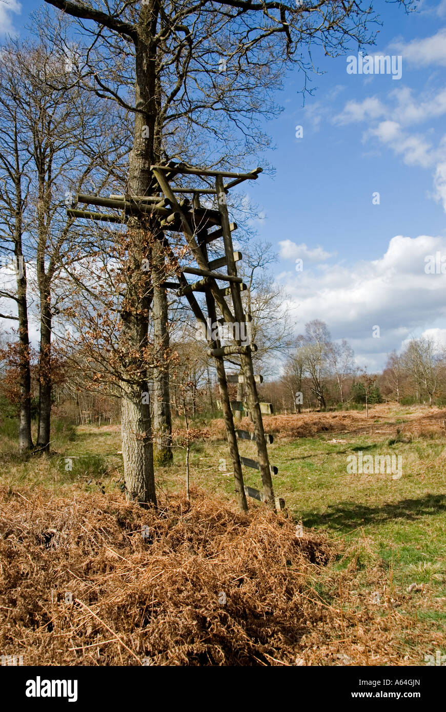 High seat used by marksmen when shooting Roe Deer.  Forestry Comission plantation, southern England - Stock Image
