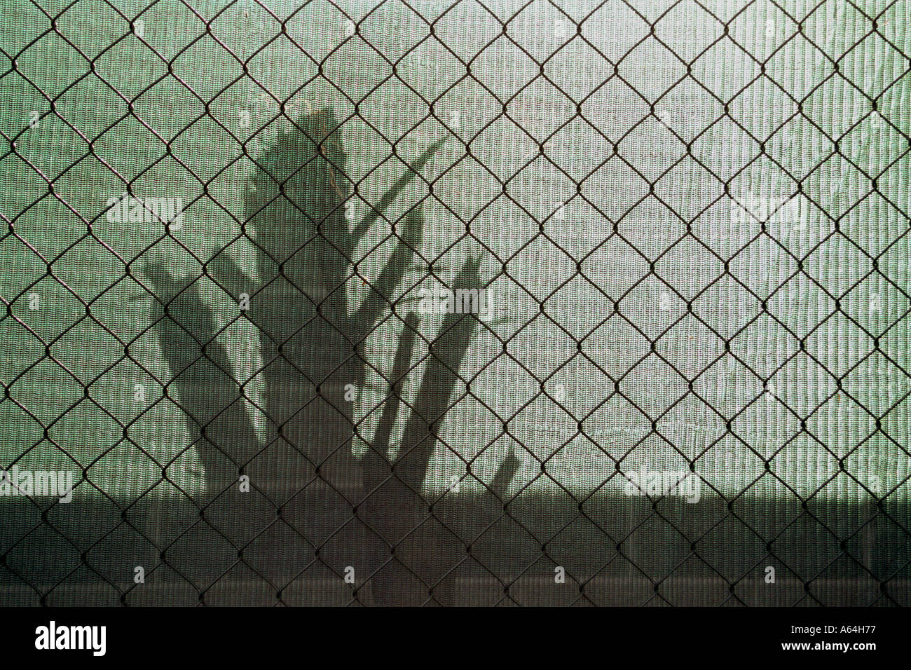 tree trunk shadow through green mesh and fencing Stock Photo ...