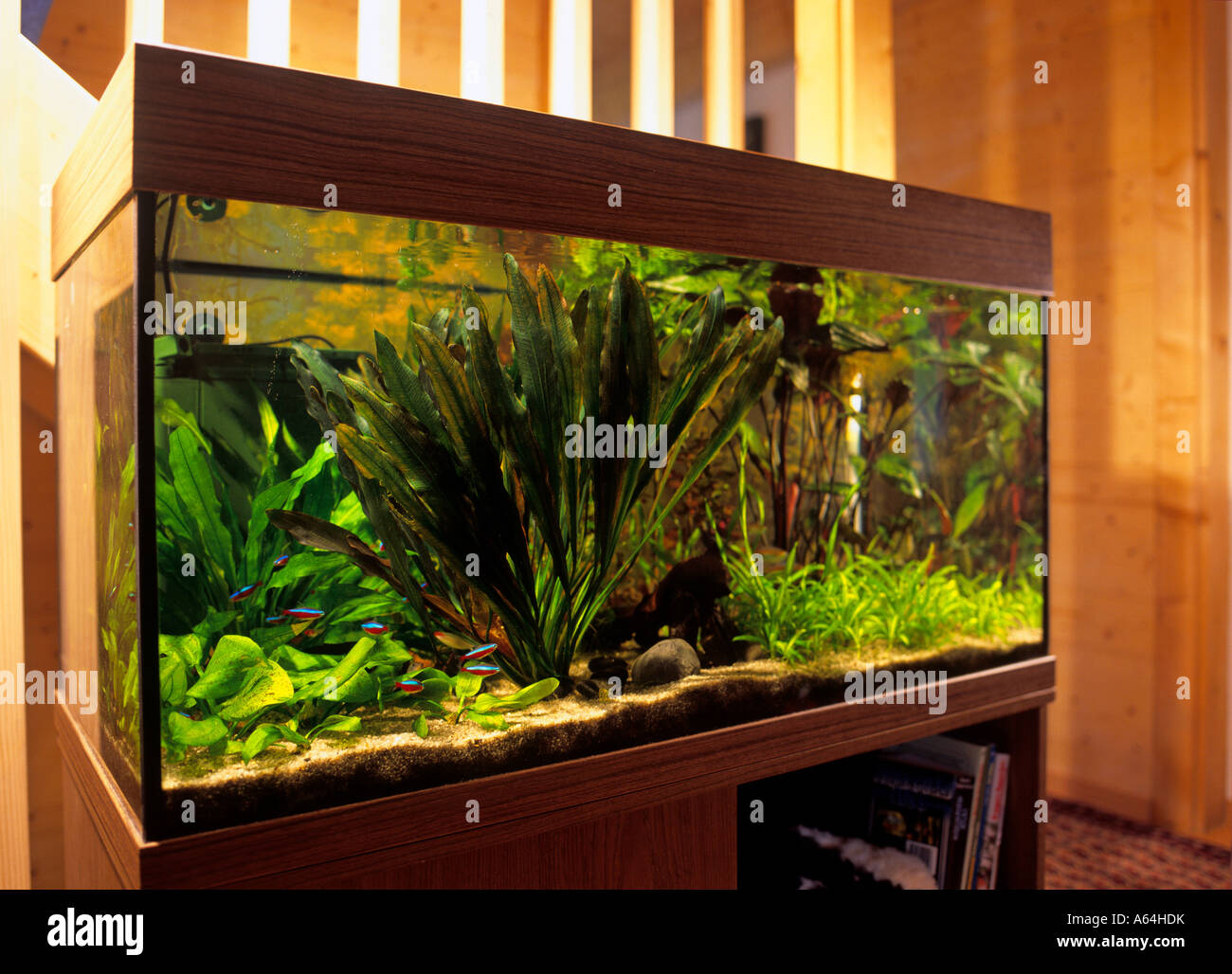 aquarium in livingroom - Stock Image