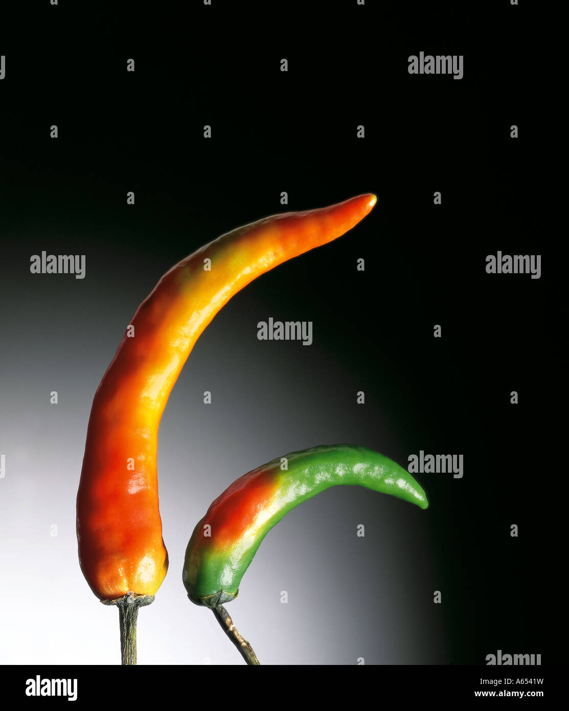Chilli peppers close up against dark background - Stock Image