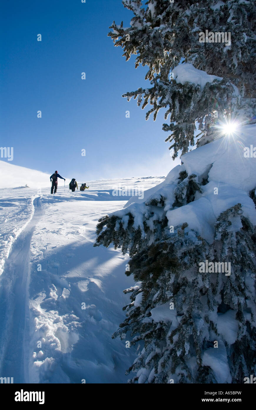Backcountry skiers in the mountains, Colorado - Stock Image