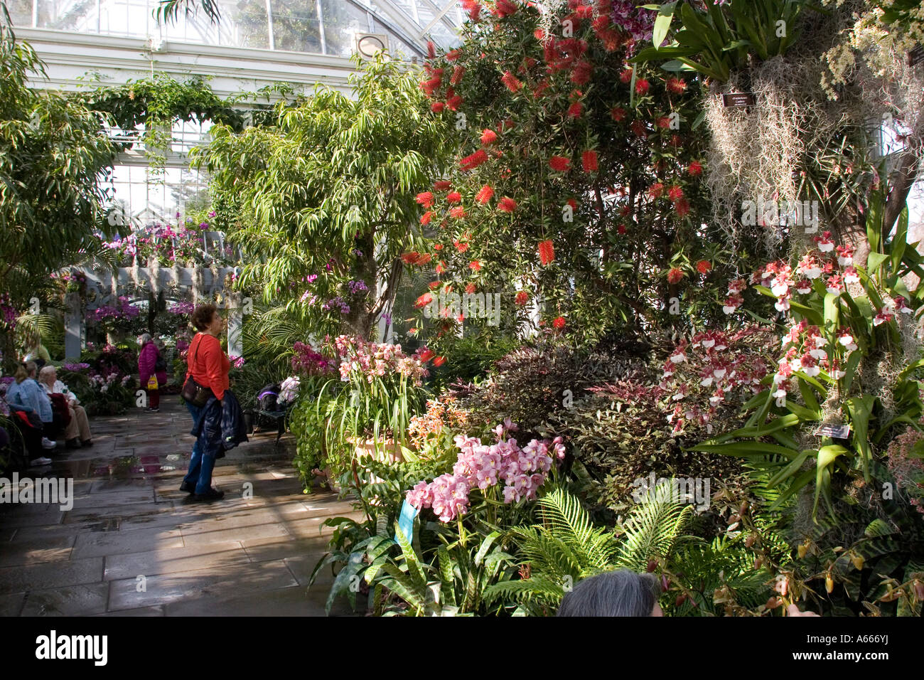 New York Botanical Gardens Orchid Show Stock Photos & New York ...