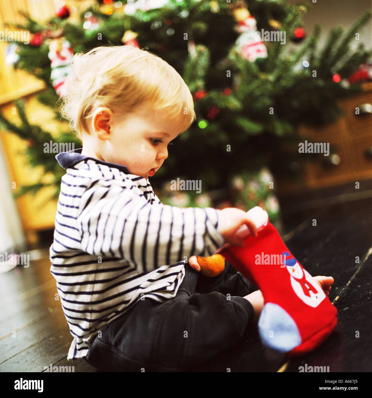 A small child looking in a Christmas stocking - Stock Image