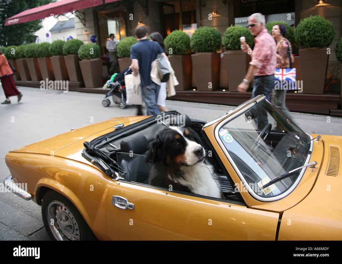dog sitting   convertible sports car mens  friend