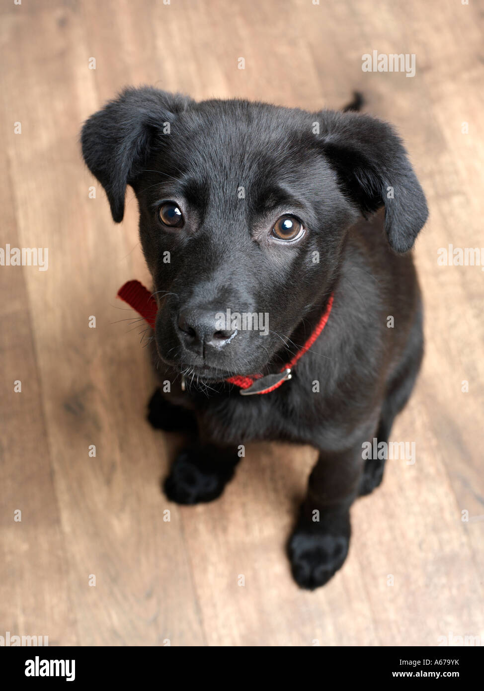puppy waiting - Stock Image