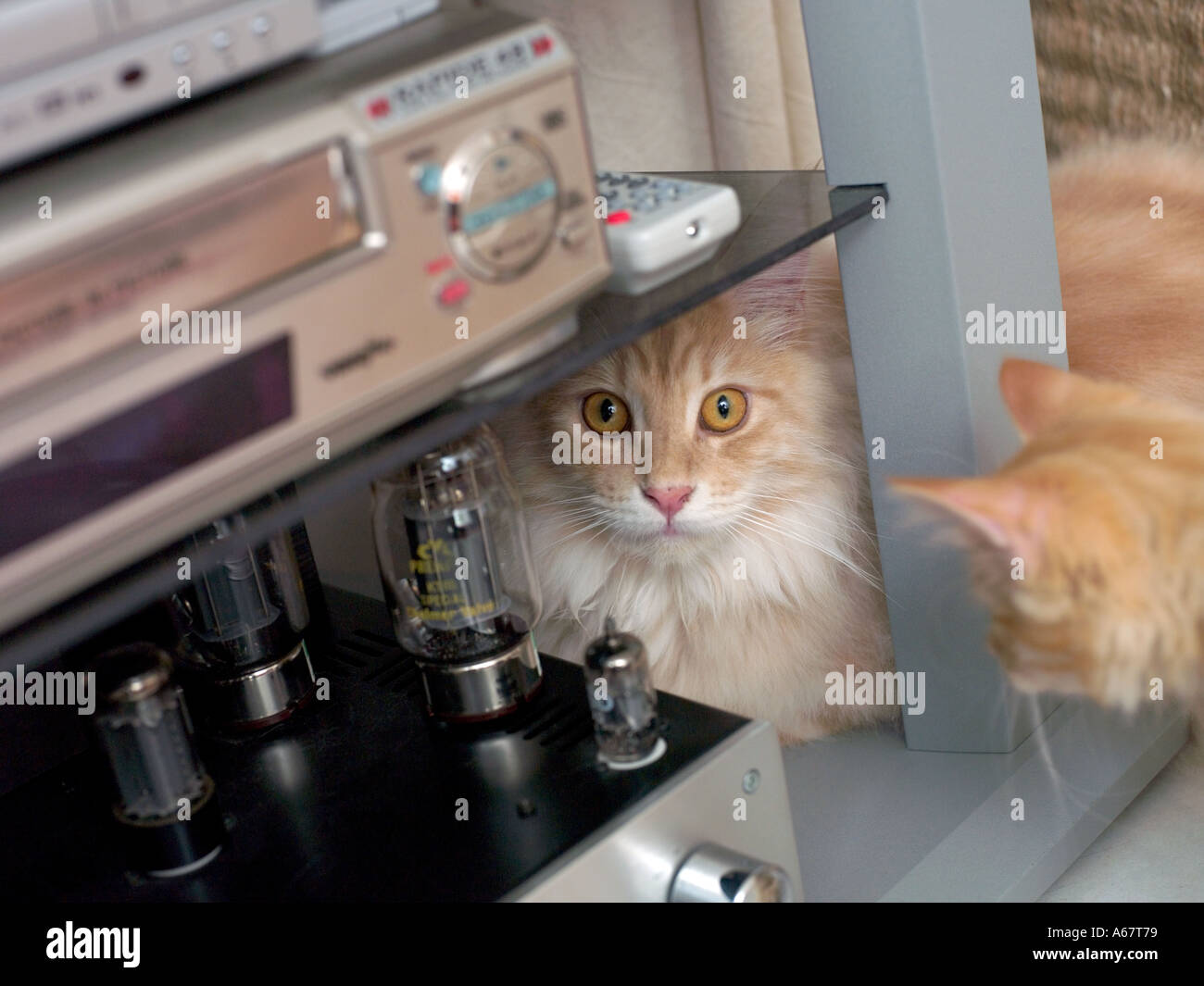 ginger cat peeking out from behind VCR player - Stock Image