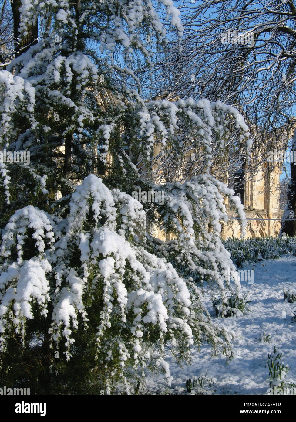 St Mary s Abbey Museum Gardens Yorkshire Museum York UK in snow - Stock Image