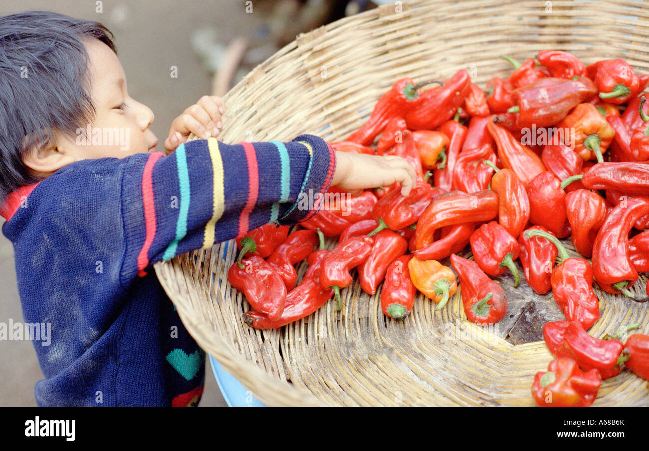 Boy reaching into a basket of red chilies, Santiago, Atitlan, Guatemala. - Stock Image