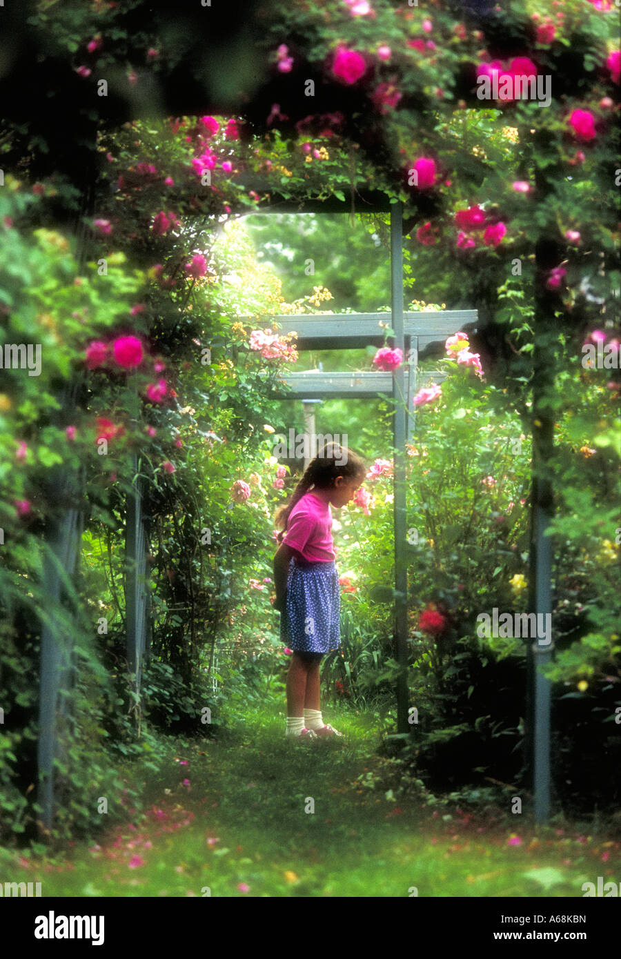 Young girl stops to smell a flower in a rose garden - Stock Image