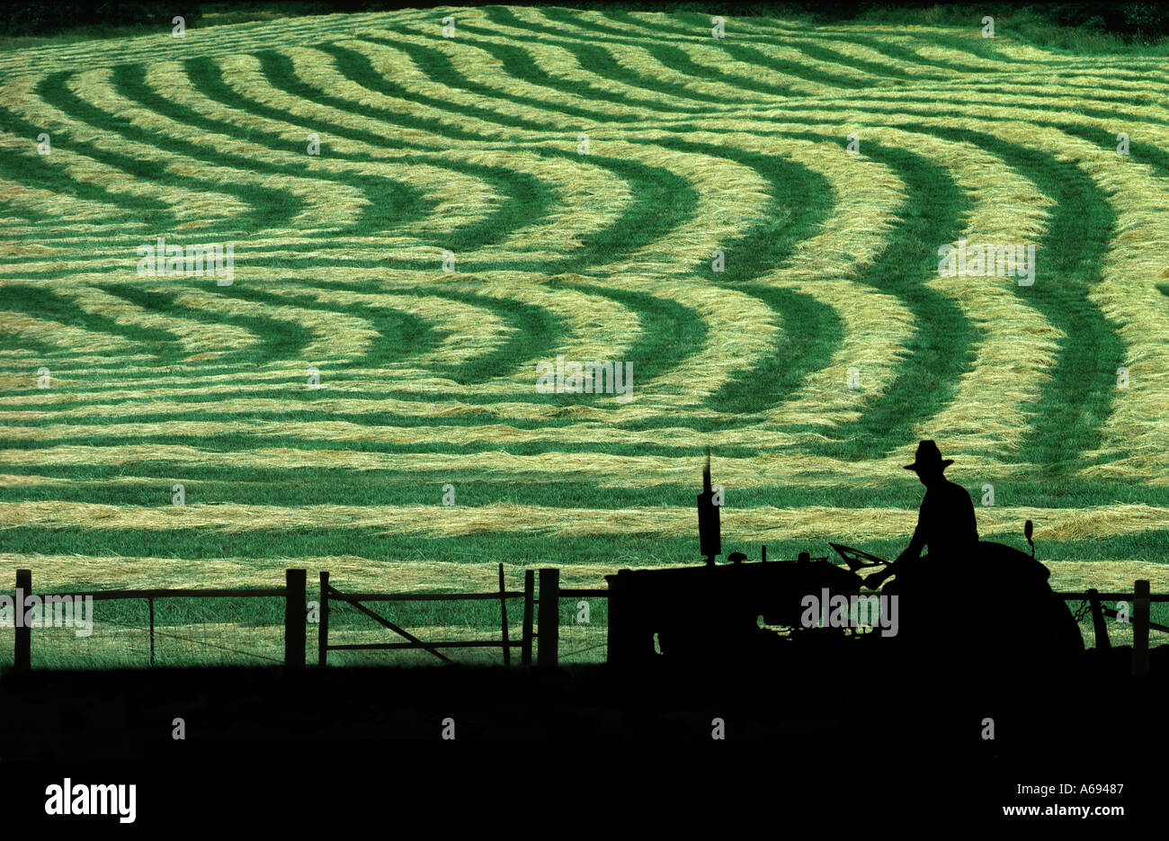 man on tractor looks at field of new mown hay Missouri United States Of Ameerica Stock Photo