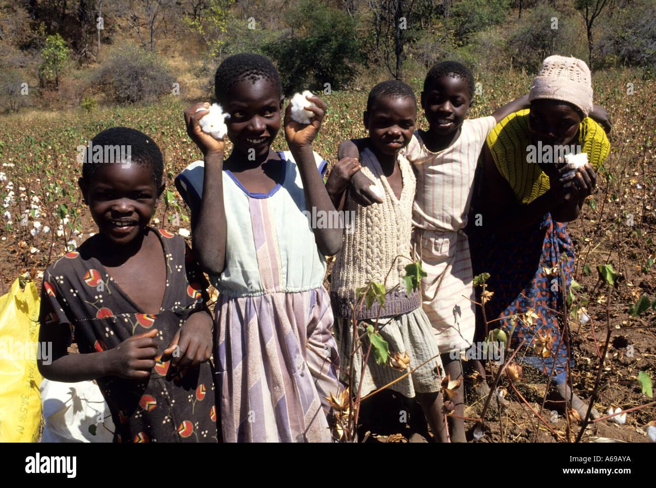 children picking cotton in Zimbabwe South Africa - Stock Image