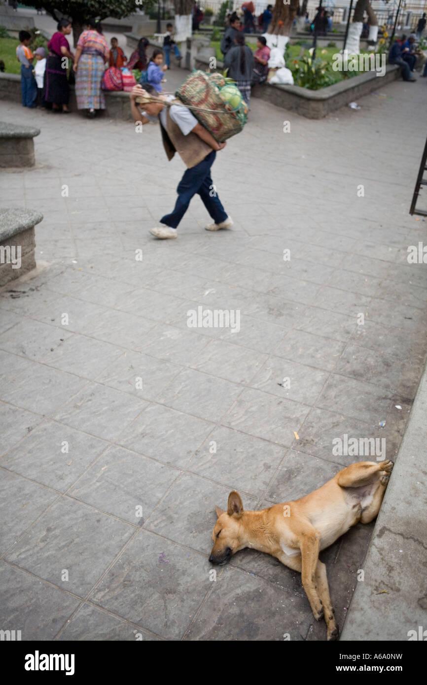 Sleeping dog in parque central park Solola Lake Atitlan Guatemala - Stock Image