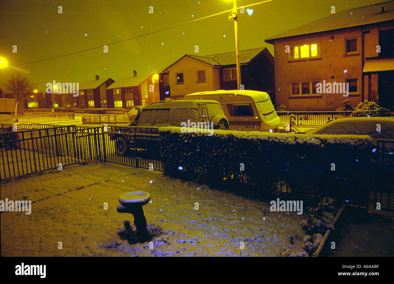 Snowing in my front garden - Stock Image