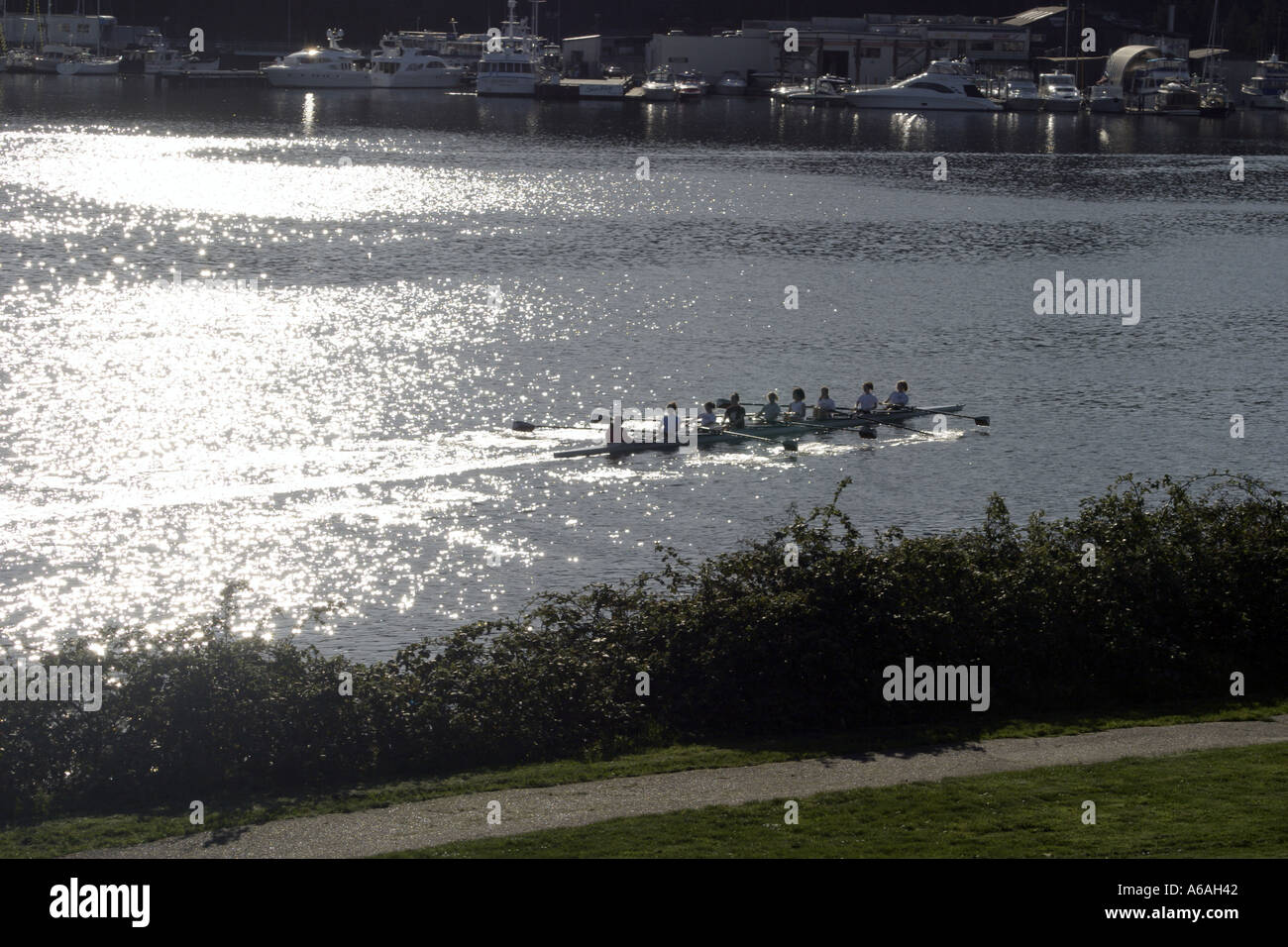 rowers on Lake Union seen from Gasworks Park in Seattle Washington - Stock Image
