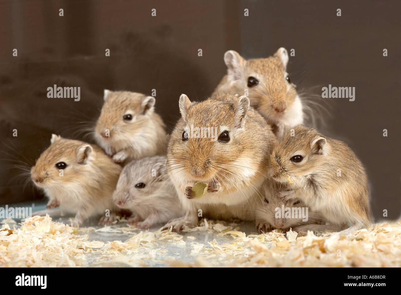 Feeding Baby Mice Food